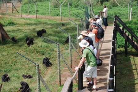 Family Safaris in Uganda