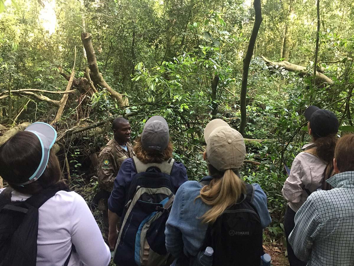 UWA Increase price of gorilla permit - Volunteer opportunities