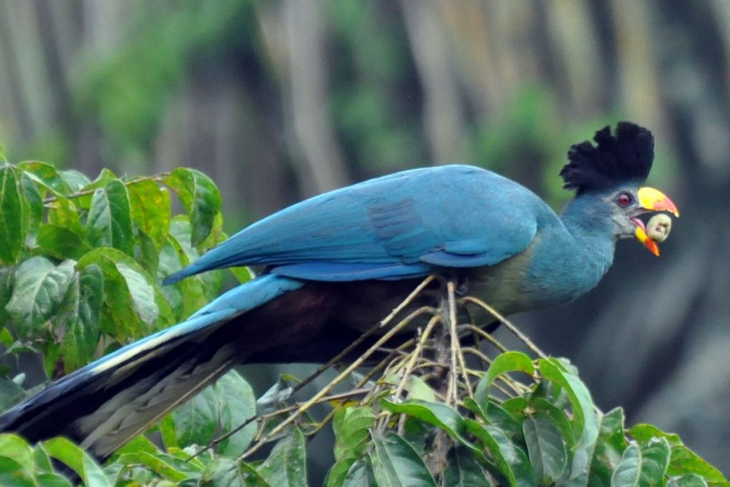 Bird Watching Experiences in Uganda