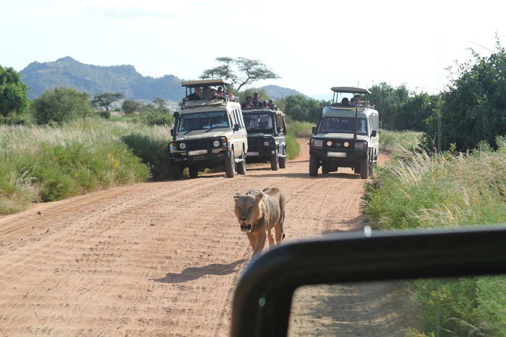 africa game drives