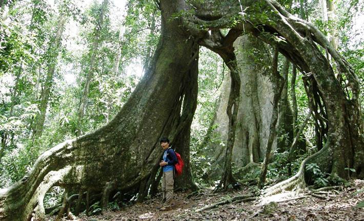 Forest walk in Mabira Forest - walking safari