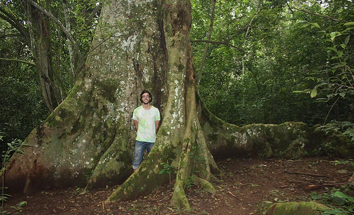 Roots of Huge Trees in Mabira Forest