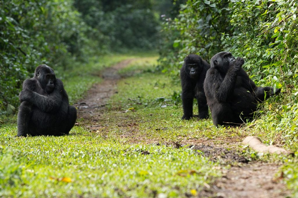 Hiking in Bwindi Impenetrable Forest