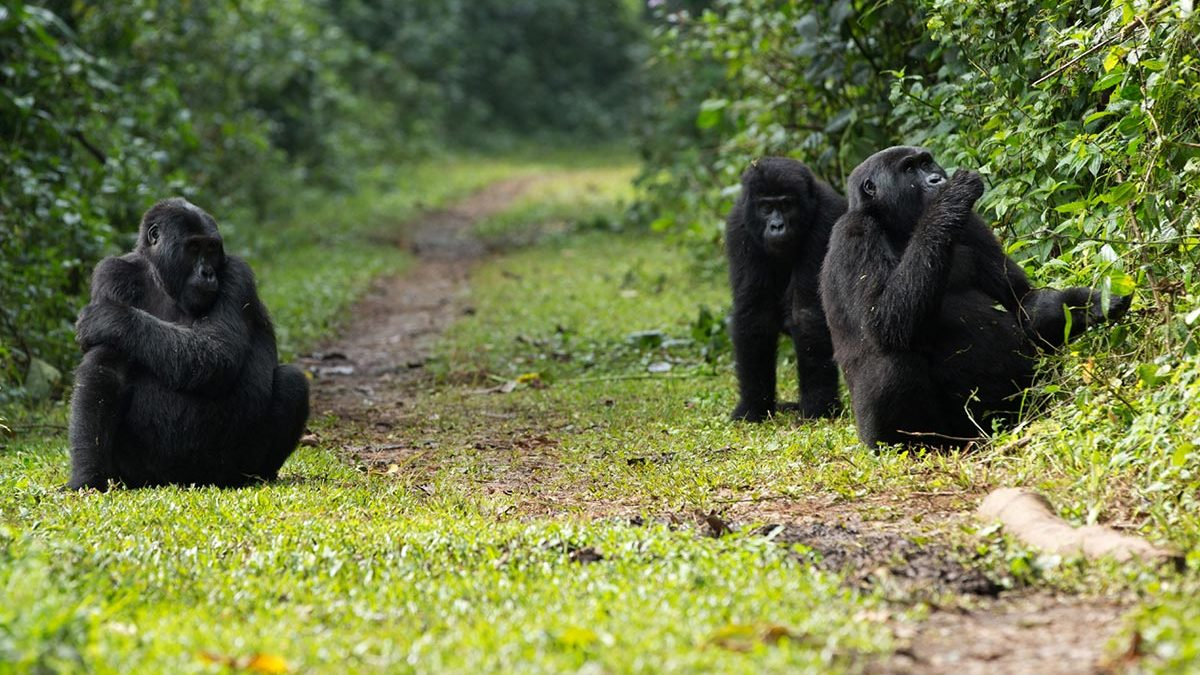 buhoma gorillas - 5 Day Uganda Gorillas and Game Safari From Kigali
