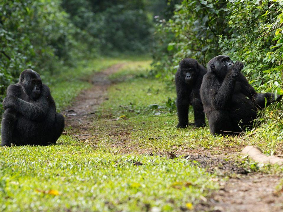 buhoma gorillas - 5 Day Uganda Gorillas and Game Safari From Kigali
