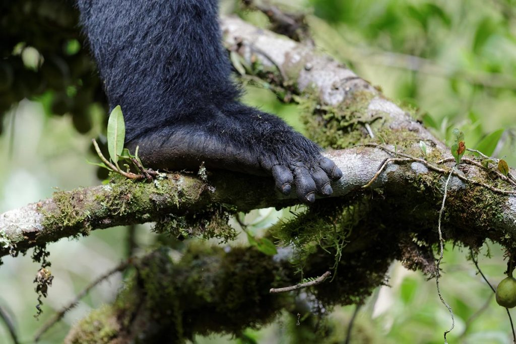 Activities in Bwindi Impenetrable Forest - Gorilla Trekking