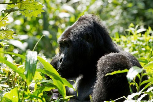 5 Day Gorillas & Wildlife Viewing Safari