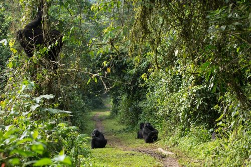 5 Day low season Uganda gorilla and wildlife safari