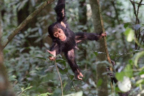 6 Days Nyungwe National Park & Lake Kivu Safari