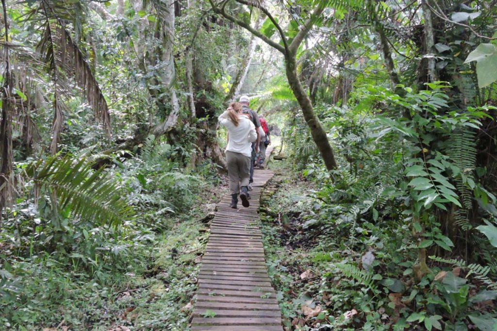 Half Day Nature Walk – Kibale Forest National Parks