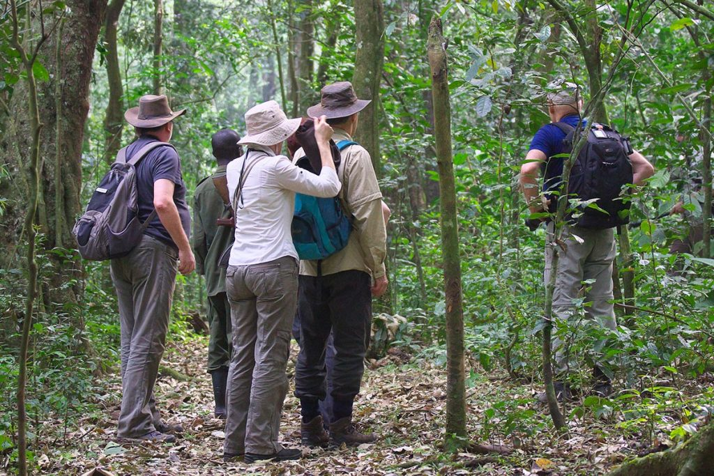 Popular Activities in Kibale National Park