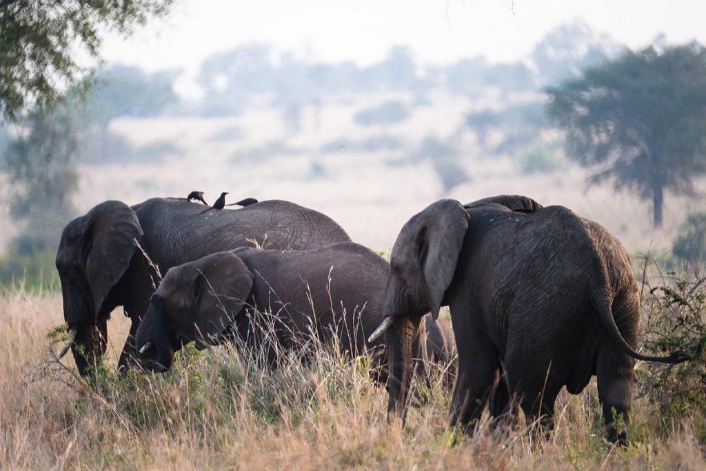 wildlife in Narus Valley