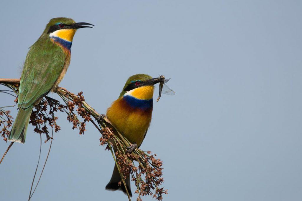 birdlife in mabamba bay