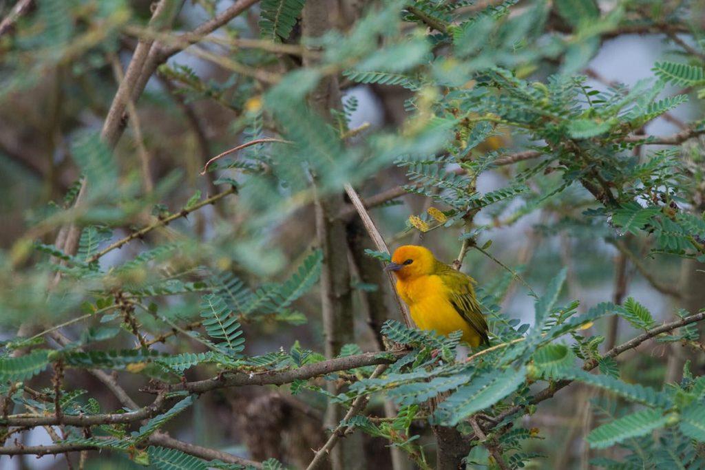 birds in mabamba