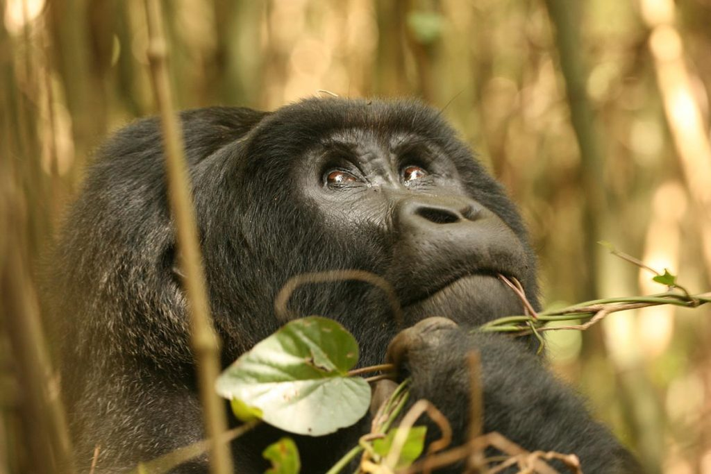 Attractions in Mgahinga Gorilla National Park