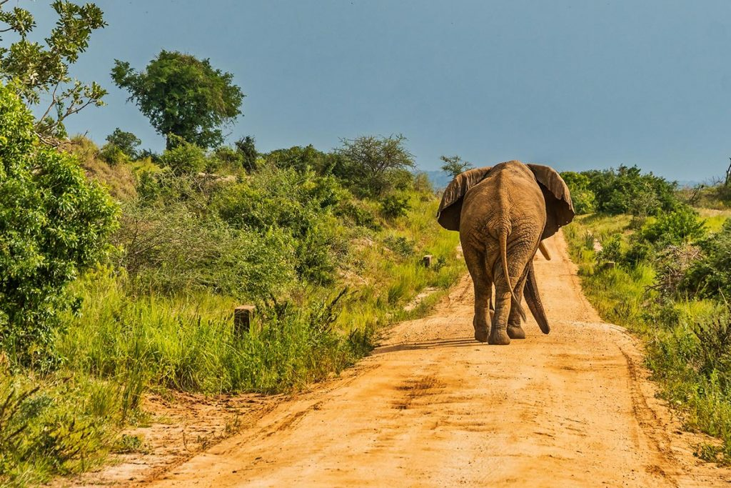 Accessing Murchison Falls National Park