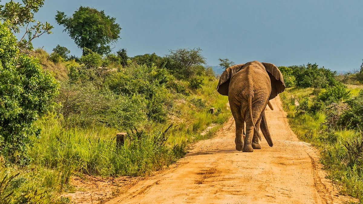 Organizing fly-in safaris to Murchison falls National Park and Kidepo Valley National Park