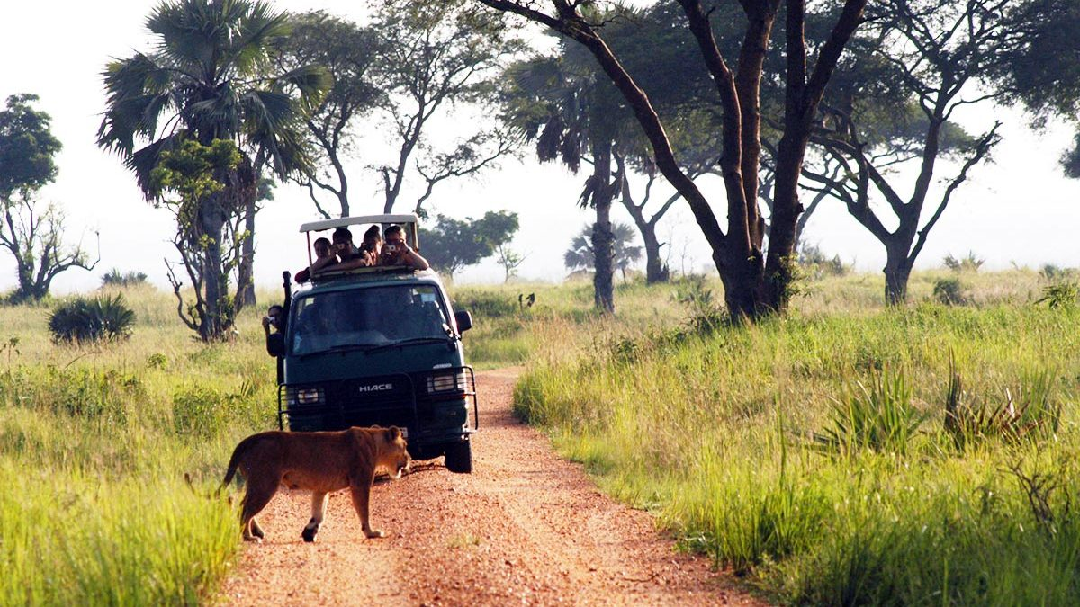 game drives in murchison falls national park