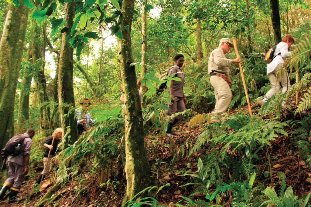 guide to bwindi impenetrable National Park