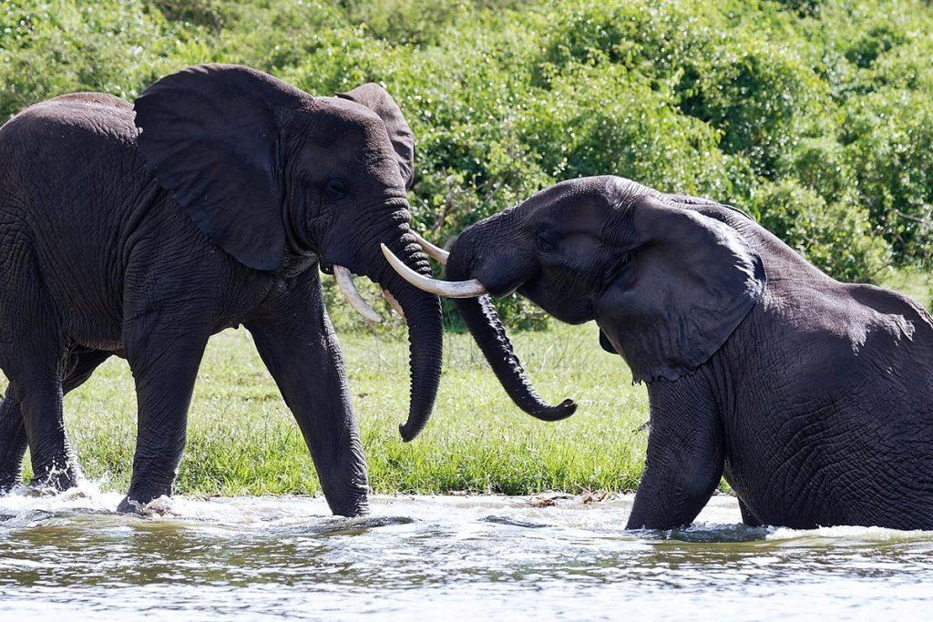 wildlife in Queen Elizabeth game park - wildlife in kenya