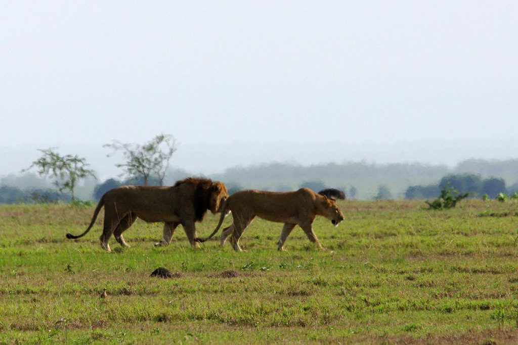 Ishasha Region in Queen Elizabeth National Park