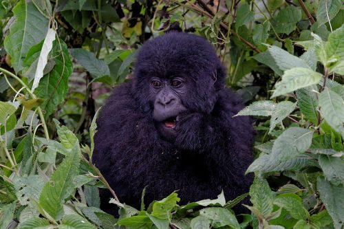 5 Days Rwanda Gorillas and Culture