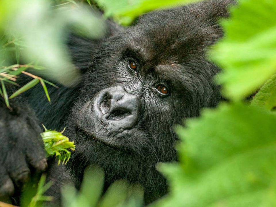 Flying gorilla trips to Bwindi from Entebbe to Kihihi/Kisoro