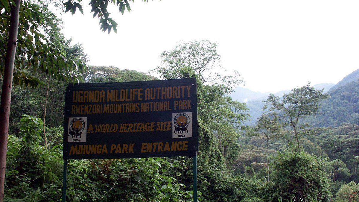 Uganda Wildlife Authority Gorilla Permits