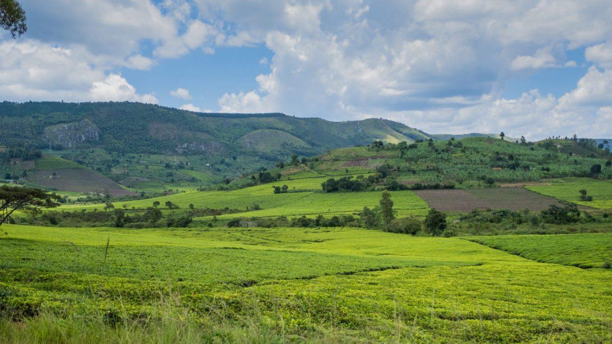 Low season Uganda safaris from Kigali Rwanda