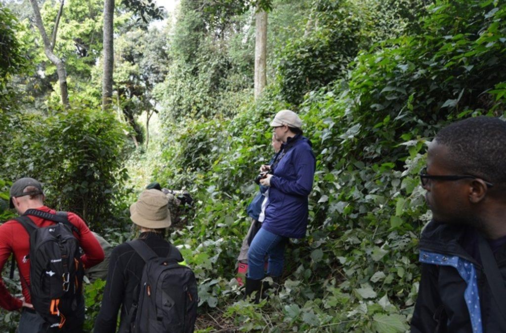 what is the price of gorilla trekking permits