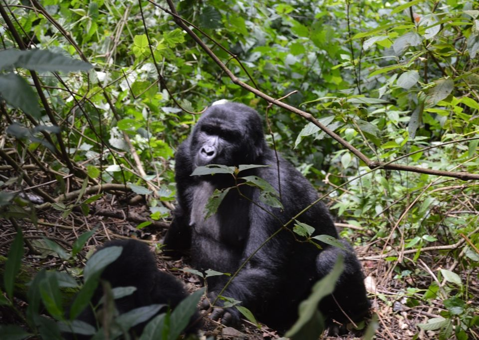 planning a luxury gorilla flying safari to bwindi