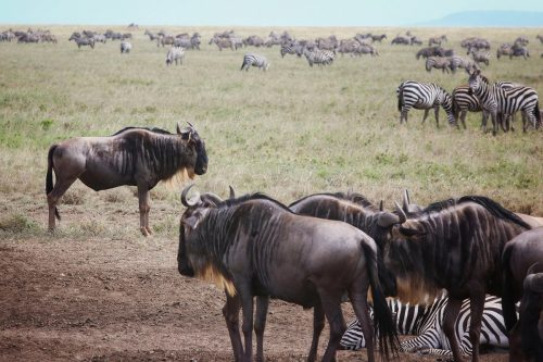 5 Day Serengeti & Ngorongoro Safari