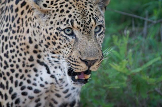 game safari in mweya area of Queen Elizaebth