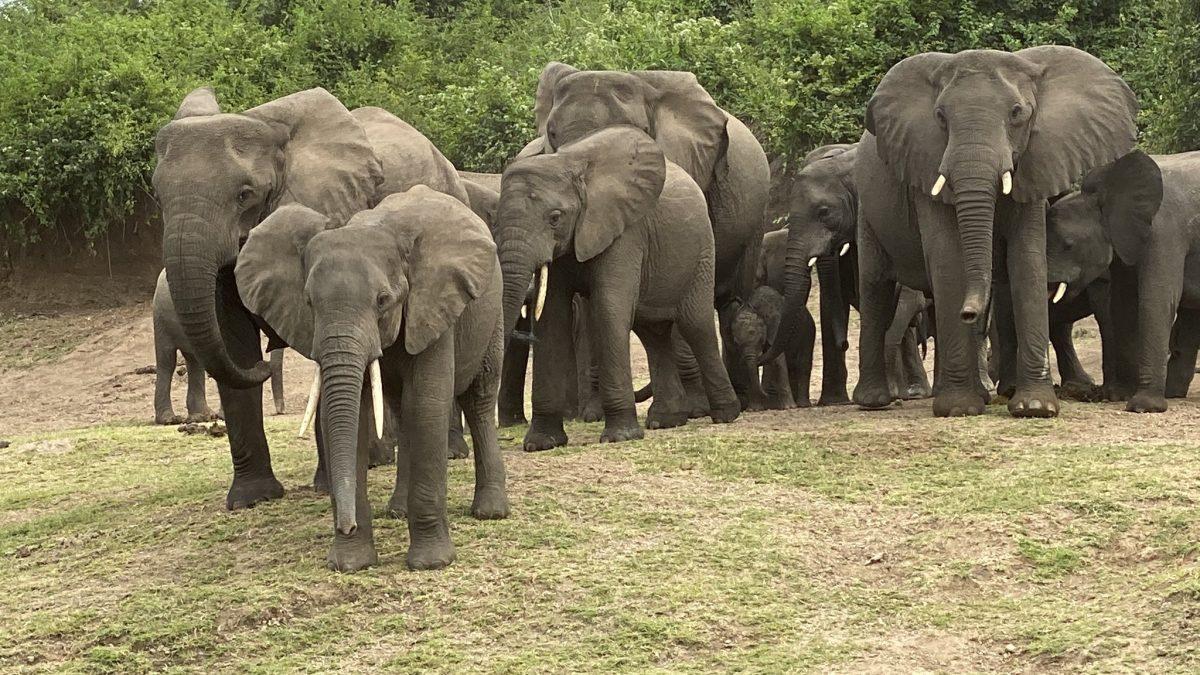 How to organize a flying safari to Mweya and Ishasha