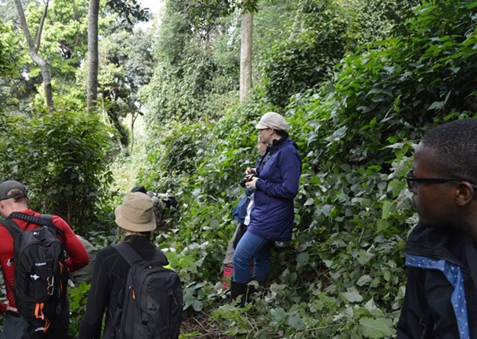 Rwanda reduces number of Visitors Per gorilla family from 8 to 6 in the New Normal