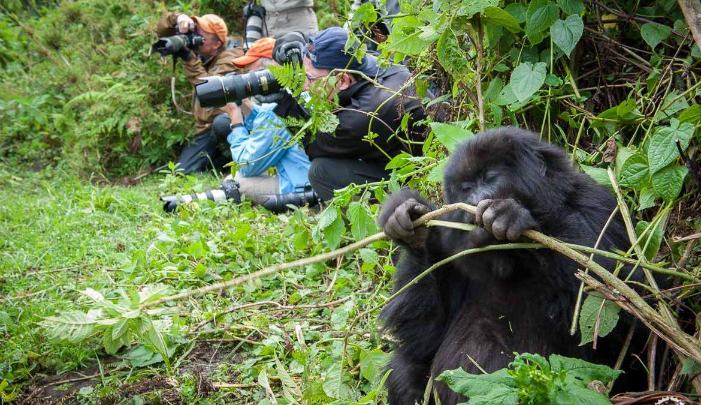 How to reschedule Rwanda Gorilla Trekking Permits