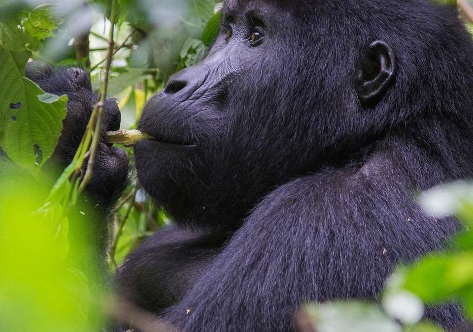 Gorilla trekking rules and regulations for Virunga National Park