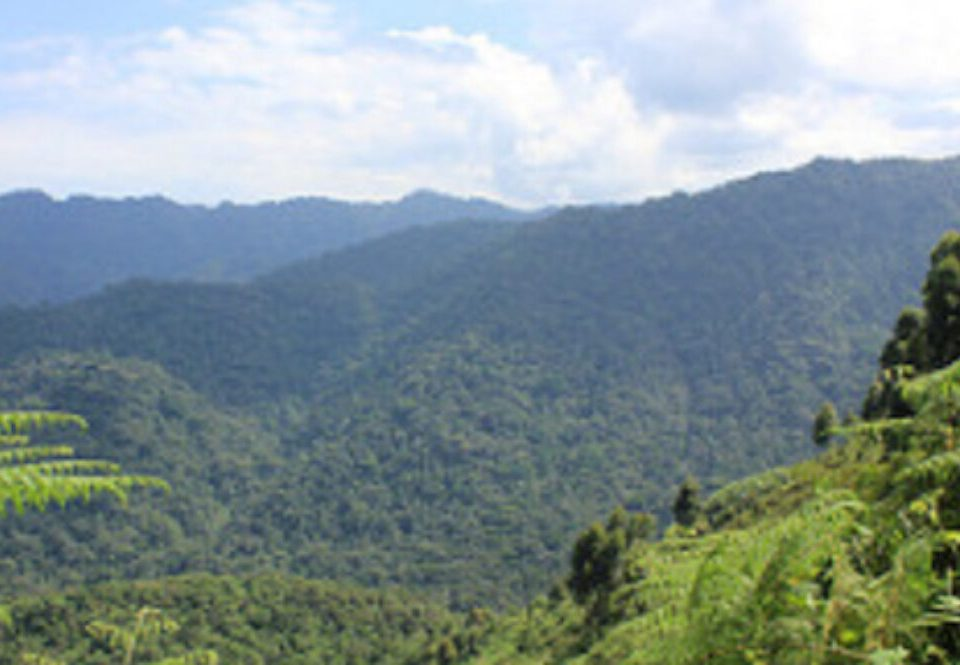 How to spend 4 days in Ruhija region of Bwindi