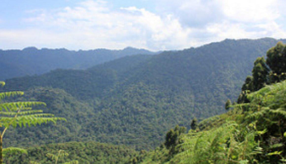 How to spend 4 days in Ruhija region of Bwindi