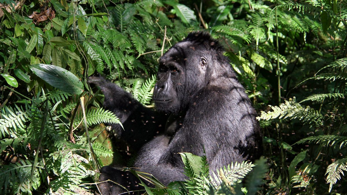 How far is Ruhija region of Bwindi impenetrable National Park from Lake Bunyonyi?